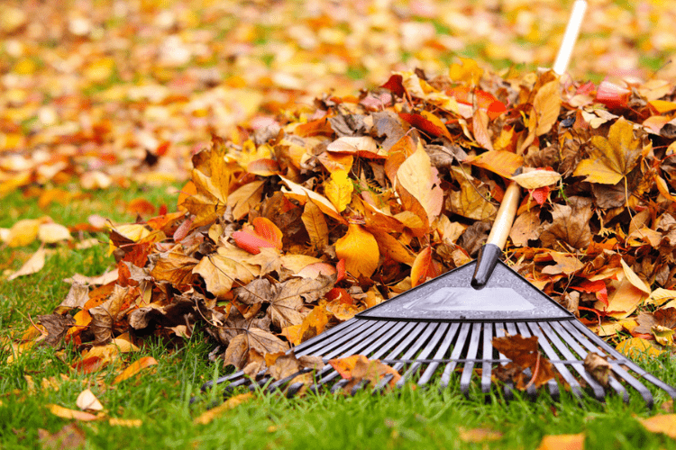 a good leaf rake
